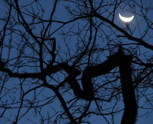 moonset-b_5558_f